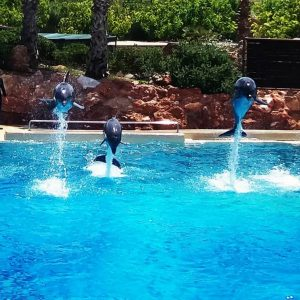 dolphins at zoo